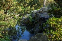 Jardin de fleurs de nature Photographie stock libre de droits