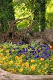 Jardin de fleurs de pensée en parc Images stock