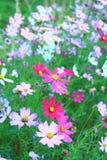Jardin de fleurs magique Photos stock