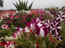 Jardin de fleurs très beau Images stock