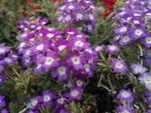 Jardin de fleurs très beau Image libre de droits