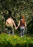 Jardin de floraison Photo libre de droits