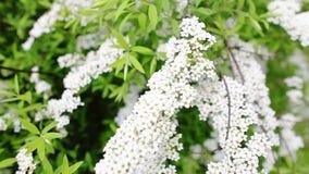 Jardin de floraison clips vidéos