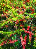 Jardin de floraison Photo stock