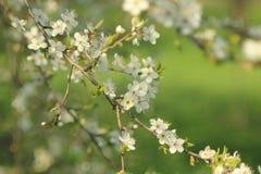 Jardin de floraison Photographie stock libre de droits
