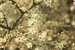 Jardin de floraison Images stock