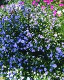 Jardin de floraison Photographie stock