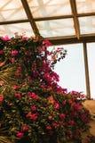 Jardin de floraison images libres de droits