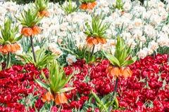 Jardin de floraison de ressort Images libres de droits