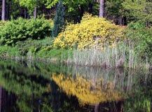 Jardin de floraison de rhododendron Image libre de droits