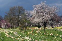 Jardin de fruit Images libres de droits