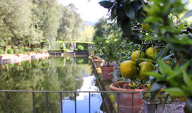 Jardin de fruit Photo libre de droits