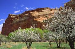 Jardin de Fruita dans Canyonlands photos libres de droits