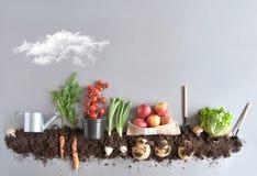 Jardin de fruits et légumes Photographie stock libre de droits
