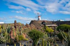 Красивый вид сада кактуса, Jardin de Кактуса в Guatiza, Лансароте, Канарских островах, Испании стоковая фотография rf
