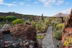 Красивый вид сада кактуса, Jardin de Кактуса в Guatiza, Лансароте, Канарских островах, Испании стоковое изображение