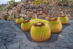 Красивый вид сада кактуса, Jardin de Кактуса в Guatiza, Лансароте, Канарских островах, Испании стоковое фото rf