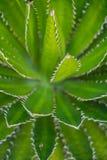 Красивый вид сада кактуса, Jardin de Кактуса в Guatiza, Лансароте, Канарских островах, Испании стоковое фото
