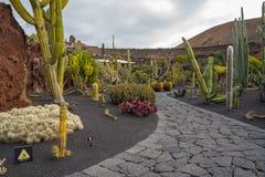 Красивый вид сада кактуса, Jardin de Кактуса в Guatiza, Лансароте, Канарских островах, Испании стоковые изображения