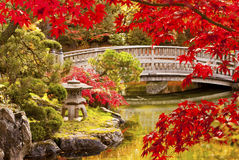 Jardin de Japonais d'automne Images libres de droits