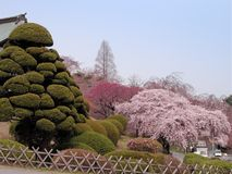 Jardin de Japonais de source Photographie stock