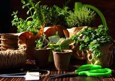 Jardin de jeune plante avec une boîte et des étiquettes d'arrosage photos libres de droits