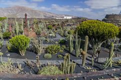Jardin De Kaktus Lanzarote obraz royalty free