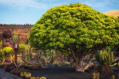 Jardin De Kaktus ogród Lanzarote, Hiszpania zdjęcie stock