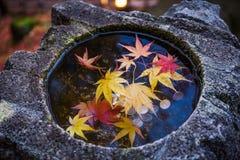 Jardin de Kenrokuen photo stock