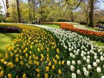 Jardin de Keukenhof Photos stock