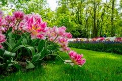 Jardin de Keukenhof, Hollande images libres de droits