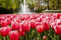 Jardin de Keukenhof - Pays-Bas Photographie stock libre de droits