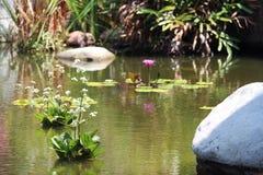 Jardin de l'eau chez Jomtien Pattaya Thaïlande Images libres de droits