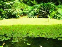 Jardin de lac Image libre de droits