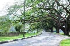 Jardin de lac taiping, Malaisie Image libre de droits