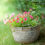 Jardin de maison Image stock