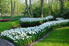 Jardin de matin au printemps Images libres de droits