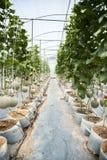 Jardin de melon Photos libres de droits
