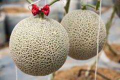 Jardin de melon Images libres de droits