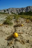 Jardin de melon/potiron dans le cappadocia Image libre de droits