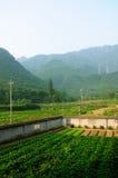 Jardin de montagne Photographie stock libre de droits