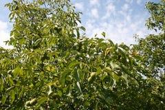 Jardin de noix Photographie stock libre de droits