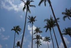 Jardin de noix de coco Image libre de droits