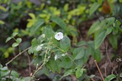 Jardin de Pachmari de photo de fleur images libres de droits