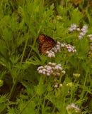 Jardin de papillon Images libres de droits