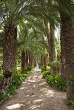 Jardin de paume - Elche - Espagne Photo stock