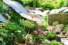 Jardin de pivoine Images libres de droits