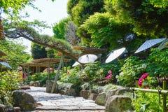 Jardin de pivoine Image libre de droits
