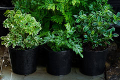 Jardin de plante verte Photo libre de droits