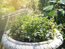 Jardin de plante verte Photographie stock libre de droits